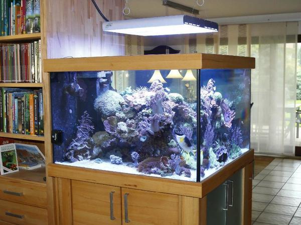 meerwasseraquarium 100x100x65cm in d sseldorf fische aquaristik kaufen und verkaufen ber. Black Bedroom Furniture Sets. Home Design Ideas