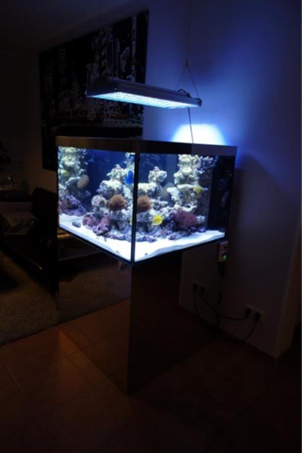meerwasseraquarium in kleinostheim fische aquaristik. Black Bedroom Furniture Sets. Home Design Ideas