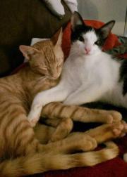 Nacho & Noah (*09/
