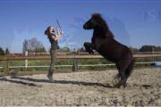 Natural Horsemanship Reiten
