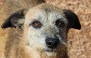 Olivia, Tierschutzhund aus