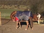 Pferde Boxen misten