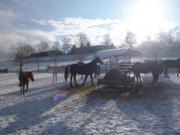 Pferdebox frei!!