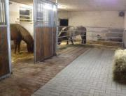 Pferdebox / Offenstall frei