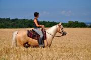 Pferdeverkauf am Wochenende!!