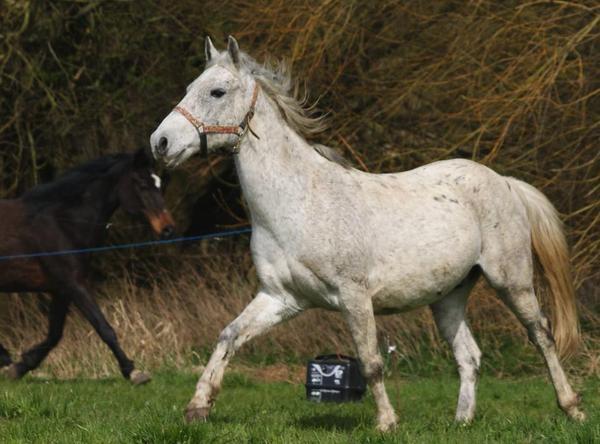 pony schimmel in bettange pferde kaufen und verkaufen ber private kleinanzeigen. Black Bedroom Furniture Sets. Home Design Ideas
