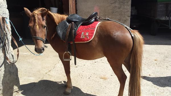 pony pferde kaufen
