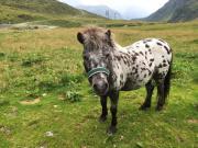 Pony sucht DICH