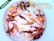 Primus Koi-Mix -