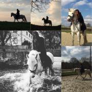 Reitbeteiligung (Pferd)