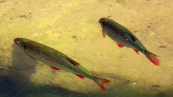 Garten teich neu und gebraucht kaufen bei for Fische gartenteich geeignet