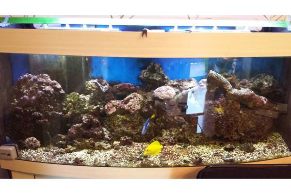 Salzwasser aquarium 500liter in eppelheim fische for Salzwasser aquarium fische