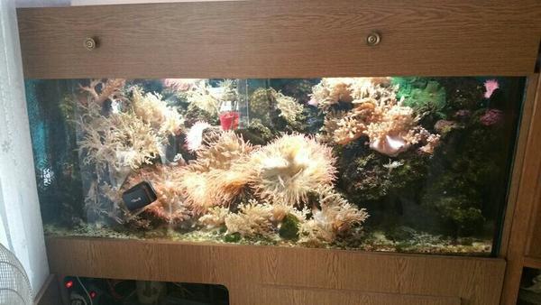 Salzwasser aquarium inkl inhalt zubeh r 500 euro in for Salzwasser aquarium fische