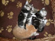 Sehr süße Katzenbabys