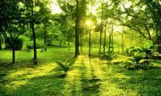 Suche Garten-/Freizeitgrundstück