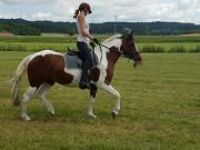 Suche Reitbeteiligung (Pferd