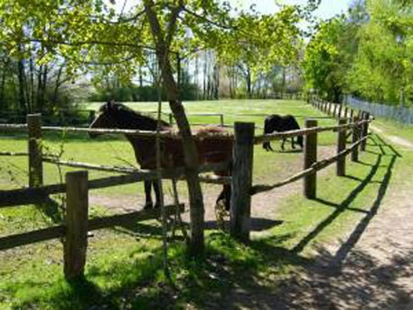 Suchen Haus Bauernhof Hofreite o ä mit Weideland zur