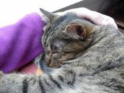 Süße Katze Lilu