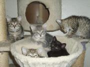 Süße Katzenbabys 9