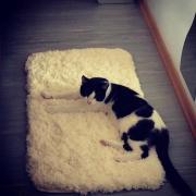 Teddy und Milka