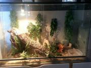 Terrarium mit Schlange Schlangen, Terrarium, Verkaufe hier ein schönes großes voll eingerichtetes Terrarium mit Schlange. Die Boa ist ca 170 cm lang und sie ist ... 140,- D-42489Wülfrath Heute, 08:03 Uhr, Wülfrath - Terrarium mit Schlange Schlangen, Terrarium, Verkaufe hier ein schönes großes voll eingerichtetes Terrarium mit Schlange. Die Boa ist ca 170 cm lang und sie ist