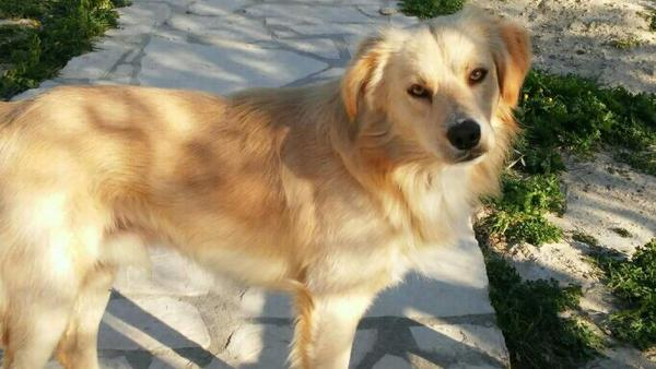 Theo - ca 1 » Hunde