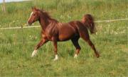 Tierheilpraxis für Pferde