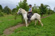 Tinker Pony Stute