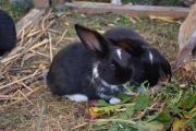 Tolle Kaninchen