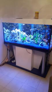Top Aquarium mit