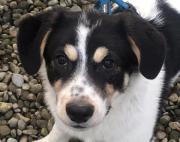 Tzuica, 7 Monate