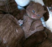 Unsere Kitten vom