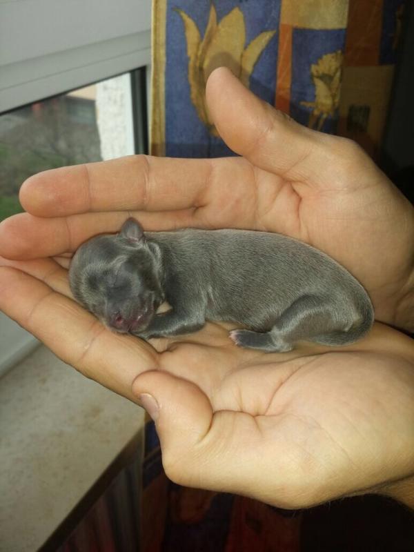 Hunde Baby Kaufen