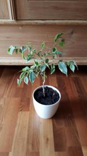 Verschiedene Zimmerpflanzen günstig