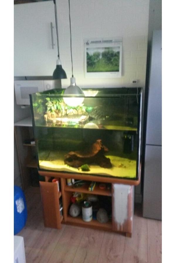 wasserschildkr ten aquarium mit unterschrank und zubeh r. Black Bedroom Furniture Sets. Home Design Ideas