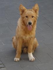 Wunderschöner Junghund sucht