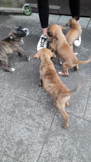 10 kleine Boxer
