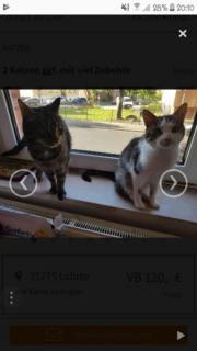 2 Katzen ggf