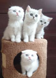 4 Wunderschöne Reinrassige