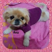 Ana, kleines Hundemädchen