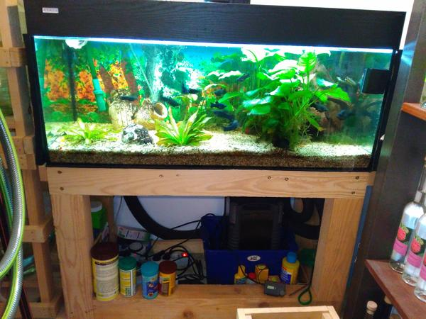 aquarium 180 liter mit filter fischen und sehr viel zubeh r in bregenz fische aquaristik. Black Bedroom Furniture Sets. Home Design Ideas