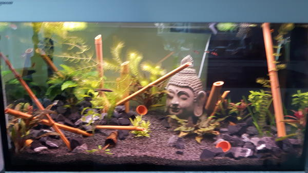 Forex platten aquarium
