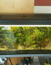 Aquarium-Komplettset