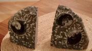 Buchstützen aus Stein mit Fossilienabbildung