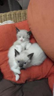 Es sind zwei Katzen 2