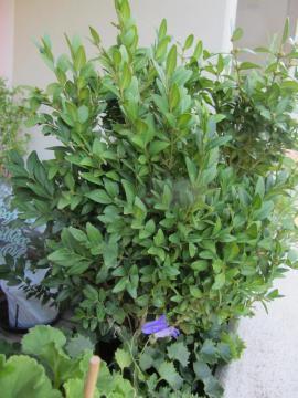 Pflanzen - Farn Glockenblumen Buchs Steingewächs Stiefmütterchen