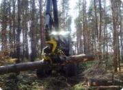 Forst, LED 80