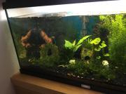 Garnelen mit Aquarium
