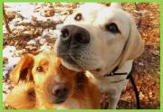 Gassi-Service, Hundebetreuung,