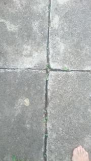 Gehwegplatten 50 x